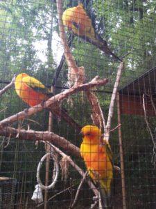 Zoo Upie - Soleil