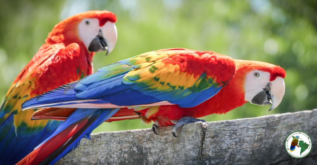 EPPSA perruche conure perroquet
